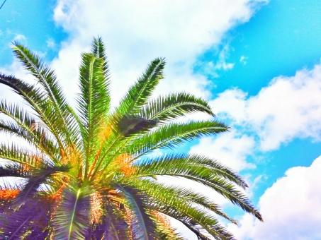 晴れ 晴天 青空 青い ブルー 空 そら スカイ スカイブルー 水色 みずいろ 雲 くも さわやか 爽快 夏 サマー 暑い季節 南国 海 うみ ビーチ 海水浴 水着 サンダル 木 葉 はっぱ 植物 ヤシの木 自然 しぜん 風景 景色 風 気持ちいい リフレッシュ 癒し リラックス 休日 休み ドライブ 車 さんぽ たのしい エンジョイ ハッピー