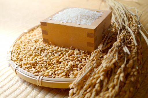 籾とイネと白米の写真