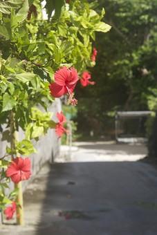 沖縄 景色 風景 自然 温暖 観光 旅行 休暇 晴天 快晴 晴れ 天気 道 田舎道 通り 花 ハイビスカス 赤い花 植物 葉 葉っぱ 満開 開花 南国 森