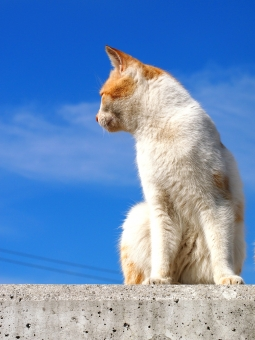 ネコ ねこ 猫 島 男木島 瀬戸内海 猫島 ねこ島 ネコ島 島ねこ 島ネコ 島猫 のらねこ のら猫 のらネコ 野良猫 野良ねこ 野良ネコ ノラネコ ノラ猫 ノラねこ 野良 のら ノラ 空 青空 快晴