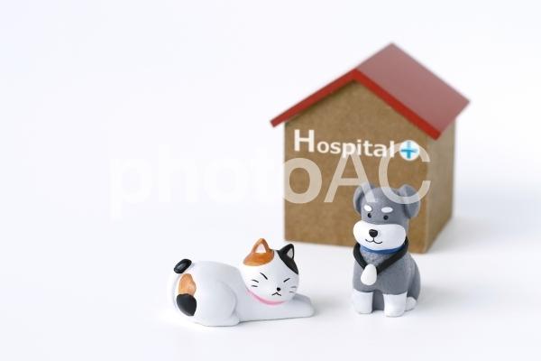 動物の病院の写真