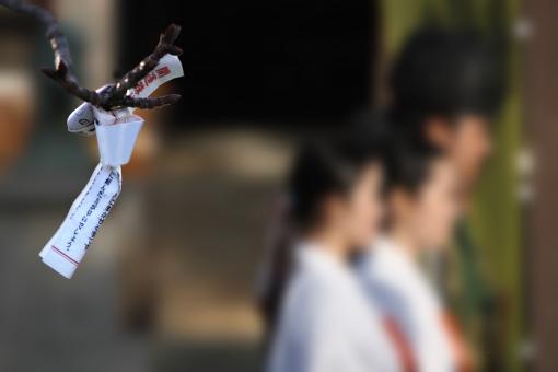 おみくじ 神社 神社境内 祈願 神だより 秋・冬イメージ お正月 初詣 巫女さん 願い事 ポストカード コピースペース 人物 女性 男性 季節感 初春