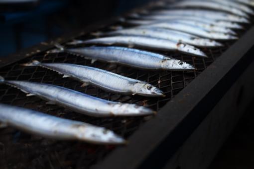 さんま サンマ 秋刀魚 鮮魚 炭火焼 秋刀魚の塩焼き サンマの塩焼き さんまの塩焼き さかな 魚 秋 秋の味覚