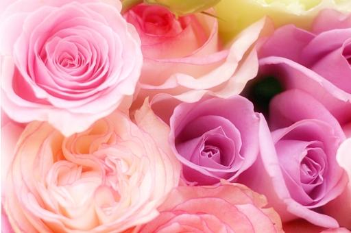 花 花束 植物 お祝い プレゼント ブーケ 贈り物 きれい 背景 バラ 薔薇 ばら 春 華やか 記念日 ピンク ロマンティック ロマンチック 花びら 小物 バレンタイン バレンタインデー