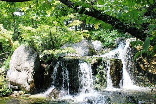 滝 小さい 水 植物 岩場 岩 もみじ 緑 夏 涼しげ