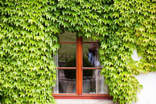 外国の窓と壁 窓 壁 外国 海外 チェコ ヨーロッパ 東欧 中欧 ガラス 透ける 綺麗 模様 外国風景 風景 素材 白壁 鉄 窓枠 四角 ナチュラル アイビー 半円 蔦 つた 植物 テクスチャ 背景 バックグラウンド