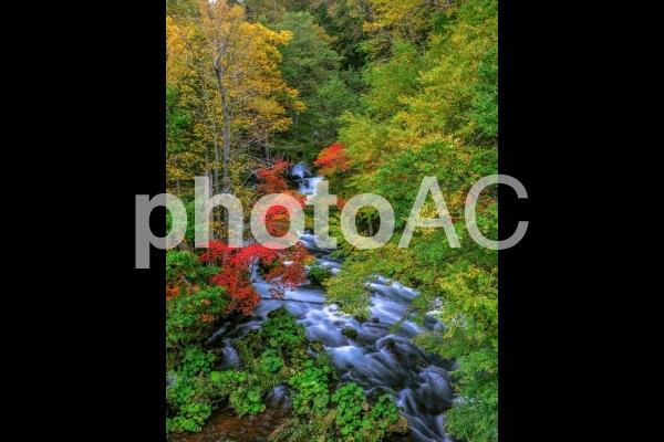 阿寒!滝見橋の紅葉の写真