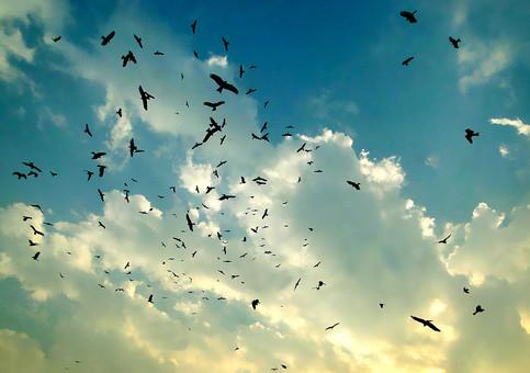 鳥の群れと青空の写真