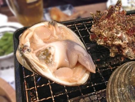 ホンビノスガイ 白蛤 はまぐり ハマグリ 蛤 貝 貝類 魚介類 魚貝類 魚貝 魚介 二枚貝 網焼き 焼き物 浜焼き 海鮮 海鮮料理 魚貝料理 魚介料理 日本食 和食 日本料理 食べ物 食品 食材 料理 調理 グルメ 食糧 食卓