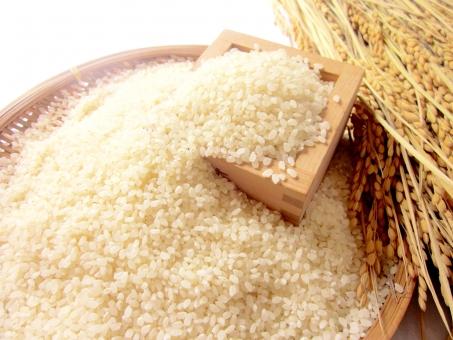 稲穂と米の写真