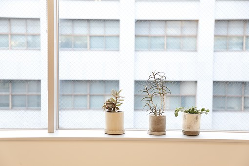 植物 観葉植物 葉 葉っぱ リーフ 緑 グリーン 小物 雑貨 小さい ミニ 鑑賞 インテリア 飾り 装飾 卓上 ポット プランター 陶器 われもの かわいい キュート おしゃれ 癒し 趣味 栽培 育てる インドアガーデニング 園芸 チビ 光合成 3つ 3個 並ぶ 並べる ディスプレイ 背景  室内 窓辺 窓際 出窓 リビング ナチュラル