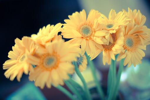 自然 植物 花 花びら 黄色 花粉 めしべ おしべ 茎 葉 葉っぱ 緑 集まる 密集 沢山 多い 束 アップ ぼやける ピンボケ 加工 満開 開く 開花 咲く 成長 育つ 無人 室外 屋外 風景 景色 幻想的