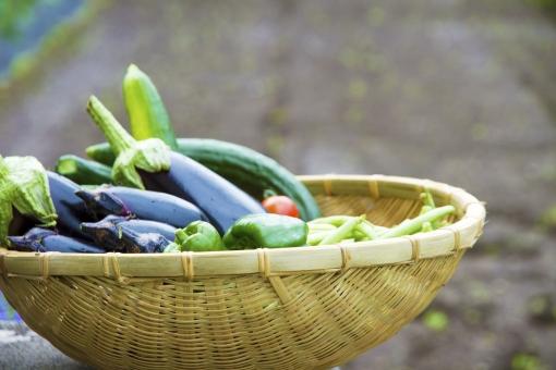 野菜 夏野菜 籠盛り かごもり 野菜集合 ザル ナス なす 茄子 米なす  食材 新鮮 採れたて 美味しい  食べ物 健康 ヘルシー フレッシュ 自然 家庭菜園 畑 トマト ミニトマト とまと キュウリ きゅうり さやいんげん サヤインゲン ピーマン ベジタブル