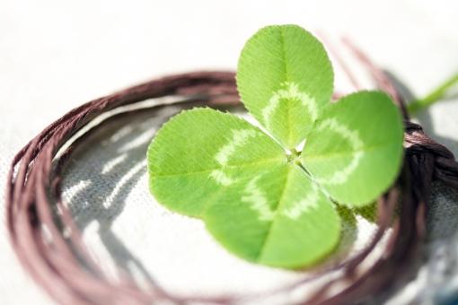 ラッキークローヴァー クローバー 植物 草 四葉のクローバー 四葉 ラッキーアイテム 幸運 ラッキー 幸せ 緑 四つ葉 四ツ葉 お守り