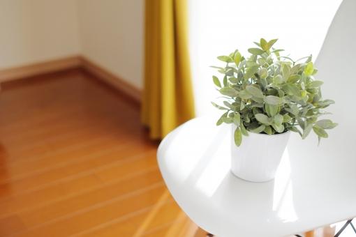 観葉植物 植物 椅子 いす イス 室内 屋内 窓 窓辺 日差し 光 明るい カーテン レース 自然光 家具 インテリア リビング