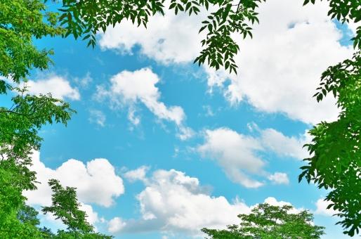 グリーン 葉 木漏れ日 新緑 葉っぱ 背景 テクスチャー 春 自然 明るい 枠 若葉 コピースペース リラックス リラクゼーション キラキラ 爽やか さわやか 植物 樹木 静かな 癒し 青葉 青空 ブルースカイ 緑 白い雲 快晴 夏の風景 夏の景色 夏 フレーム 壁紙 バックグラウンド