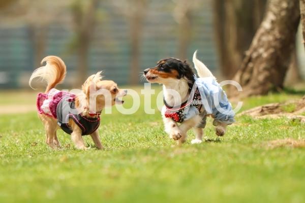 遊ぶ犬の写真