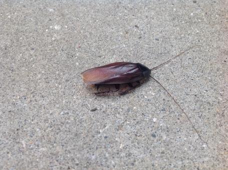 ゴキブリ ごきぶり 害虫 防虫 黒い虫