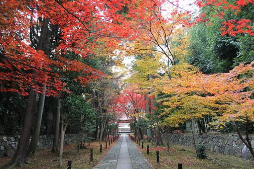 鹿王院参道の紅葉2の写真