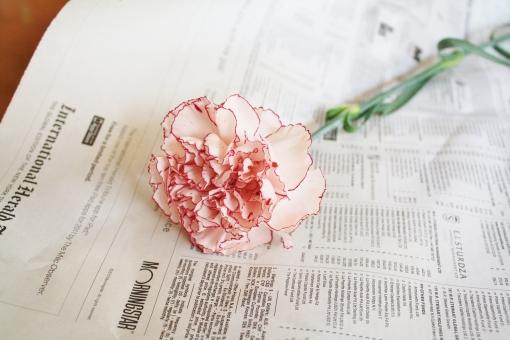カーネーション 母の日 淡いピンク 1輪 一輪 花 フラワー お花 植物 緑 花びら 5月 マザーズデー 綺麗 キレイ きれい 英字新聞 コピースペース かわいい カワイイ 可愛い 可憐 華やか 優しい 穏やか