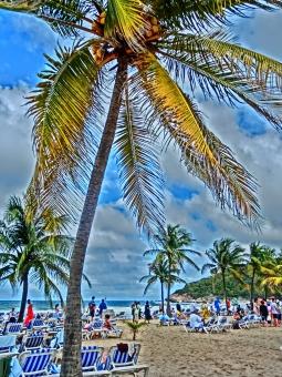 椰子の木 ヤシの木 ビーチ 南国 リゾート 青空 beach palm tree 島 サマーベッド 海 砂浜 やしの木 浜辺 sea