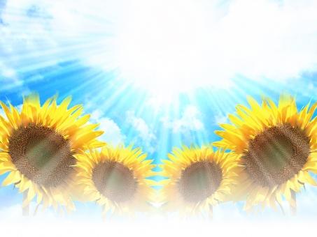 ひまわり ヒマワリ 向日葵 花 空 青空 植物 光 太陽 お日様 SUMMER 夏 サマー summer 雲 日光浴 日光 夏休み 暑中 残暑 暑中お見舞い 残暑お見舞い 大空 sky 美しい 綺麗 黄色 青 自然 元気