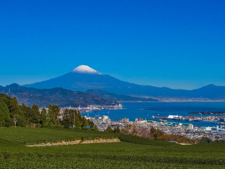 静岡県 清水 富士山 茶畑 山 木 お茶 青 緑 冬 港 空 海 雪 世界遺産 茶っ葉 茶摘み