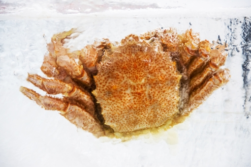 毛蟹 毛ガニ けがに 氷 北海道 冷たい カニ 蟹 かに