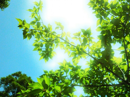 残暑 9月 8月 日射し 暑い まぶしい 紫外線 さわやか 明るい 背景 自然 木 夏 鮮やか 太陽 環境