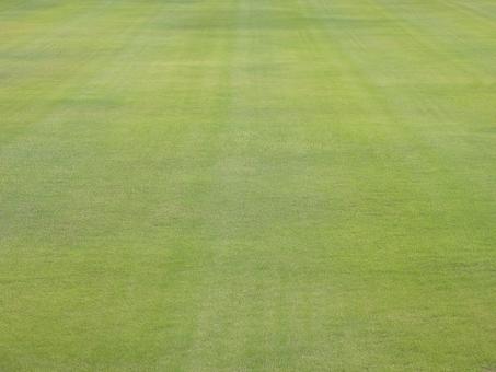 芝生 芝 テクスチャ テクスチャー 背景 背景素材 バックグラウンド 草 ピッチ グラウンド 天然芝 人工芝 刈り込み スタジアム サッカー 野球 ラグビー スポーツ グリーングラス 手入れ 庭 ガーデン 広い ワイドな 広々とした 広大な グリーン ピクニック ゴルフ フェアウェイ