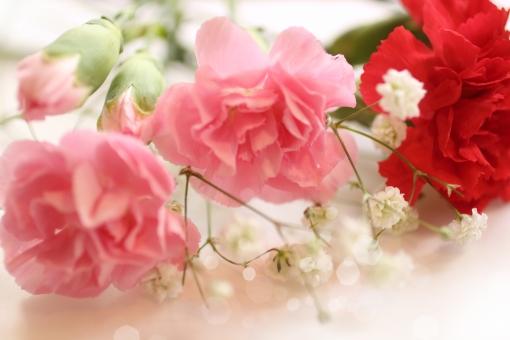 カーネーション 花束 記念日 幸せ 優しい 花 ピンク プレゼント ブーケ キラキラ 母の日 誕生日 可愛い 素材 春 初夏 夏 天気 風景 背景 おめでとう バックグラウンド 爽やか happy birthday 背景素材 背景デザイン 壁紙 自然 ナチュラル 光