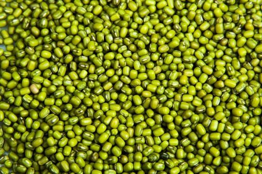 大豆 青大豆 ダイズ 野菜 豆 まめ 生豆 植物 食べ物 緑 青 料理 食品 食材 和食 収穫 調理 和風 種子 粒 マメ 保存食 食べもの 乾燥 食品 農産物