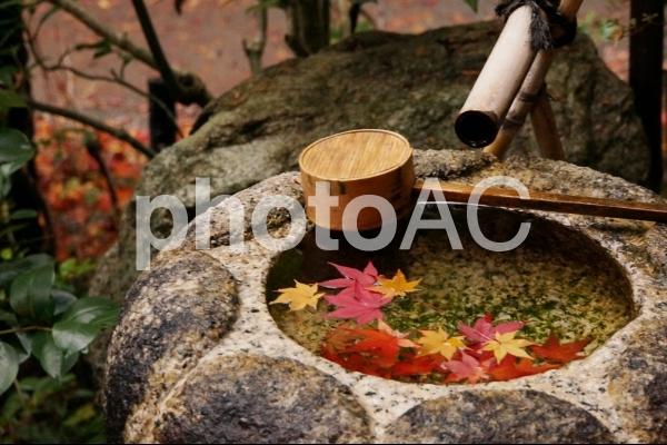 風情のある紅葉2の写真