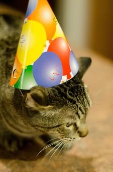 パーティー イベント おもてなし 招待 招く 祝う めでたい 宴会 盛り上がる 飾る おしゃれ 小物 猫 ペット かわいい 人気 愛嬌 帽子 おめかし ポップ 風船 紙 三角帽子 きれい アメリカンショートヘアー 虎柄