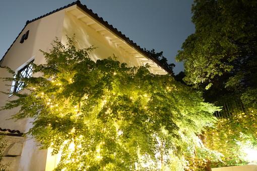 神戸 夜 夜景 ライト ライトアップ 木 植物 緑 教会 チャペル 結婚式 式場 観光 観光地 旅行 景観 建築物 建物 イルミネーション
