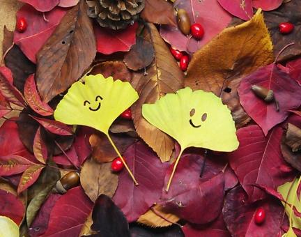 顔に切り抜いたイチョウと紅葉の写真