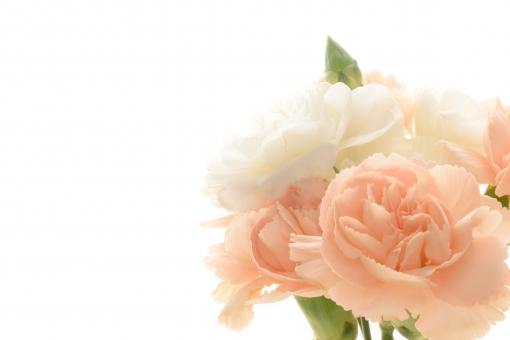 母の日 カーネーション プレゼント メッセージ メッセージカード コーラルピンク ピンク 淡い 淡いピンク 白 白バック 背景 コピースペース 文字スペース カード 壁紙 テクスチャ 明るい 感謝 尊敬 花言葉 パステル アレンジ アレンジメント フラワーアレンジメント 花束 贈る 贈りもの 贈り物 花 植物 フラワーギフト 母 お母さん
