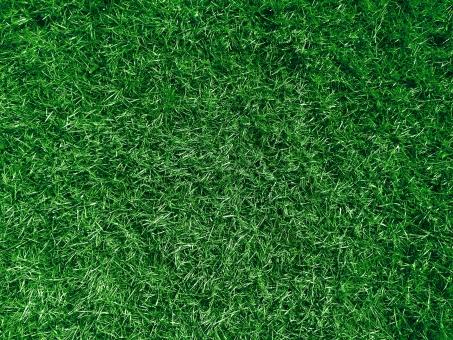 芝 芝生 背景 バック バックグラウンド テクスチャ テクスチャー 草 自然 グリーン 緑 緑化 環境 エコ ガーデニング 庭 地面 ふさふさ 青々 春 夏 屋外 天然芝 野球 サッカー サッカー場 球場 グラウンド フィールド ゴルフ