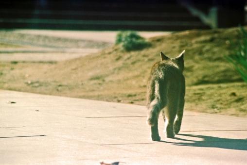路上の猫の写真