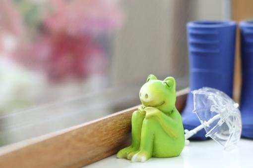 外を眺めるカエルの写真