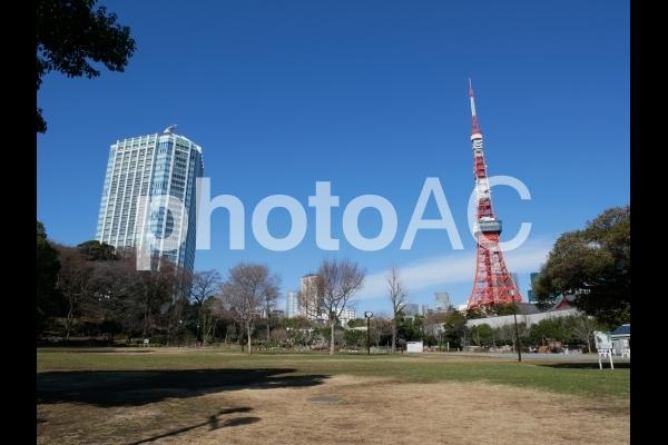 芝公園から見える東京タワー 1の写真