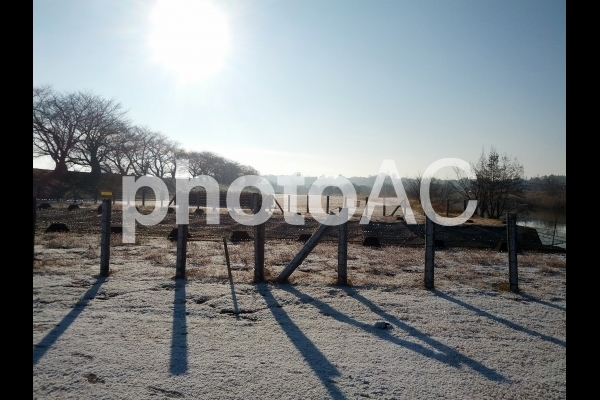 雪の朝の写真