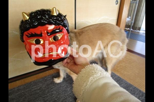 犬と節分の写真
