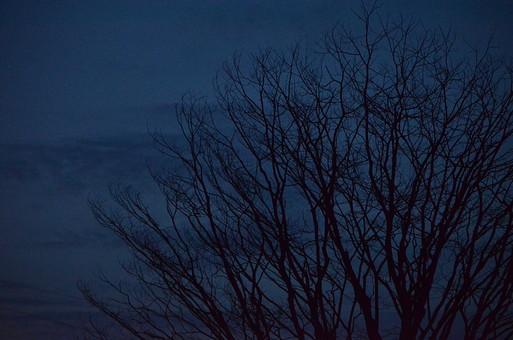外国風景 外国 海外 フィリピン アジア 東南アジア 南国 観光地 旅行 観光 自然 風景 景色 森の中 植物 森林 森 クローズアップ 樹 樹木 枝 葉 シルエット 夕暮れ 夕焼け 夜