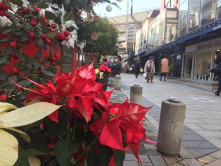 クリスマス 12月 師走 12月 自由が丘 緑道 石畳 オシャレ 散歩 ツリー 楽しい 年末 街