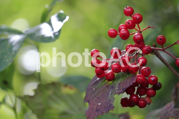 秋の彩の写真