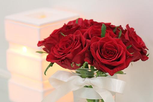 ばら バラ アロマ 花 照明 愛 美 愛情 情熱 熱烈な恋 植物 フラワー 種子植物 花弁 花びら 生花 葉 葉っぱ 赤い花 白背景 白バック ホワイトバック 5月 6月 10月 11月 ギフト 贈呈 プレゼント ラッピング ローズ レッドローズ
