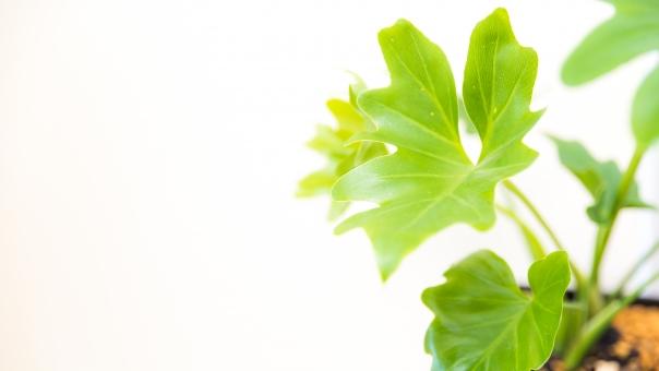 自然 植物 樹木 葉っぱ 木の葉 新緑 緑 グリーン 初夏 夏 爽やか 木漏れ日 光 透過光 マイナスイオン 清潔感 澄んだ空気 若葉 眩しい テクスチャー 壁 壁紙 カフェ テクスチャ インテリア ナチュラル アンティーク 板 おしゃれ 雑貨 ベージュ ウォール リメイク リノベーション 温もり 白壁 白 コピースペース イメージ クリーン 家 土