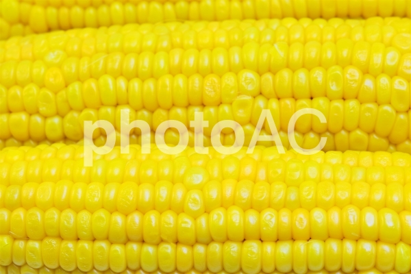茹でトウモロコシの写真