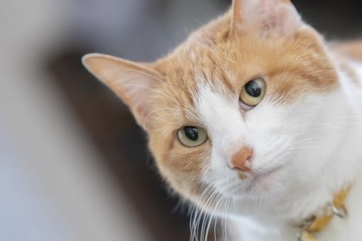 凛とした猫の顔の写真
